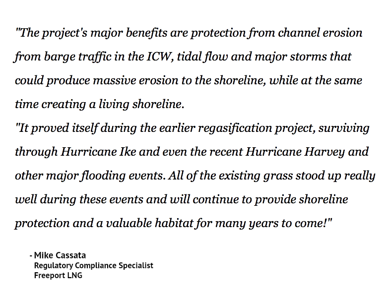 """The project's major benefits are protection from channel erosion from barge traffic in the ICW, tidal flow and major storms that could produce massive erosion to the shoreline, while at the same time creating a living shoreline. ""It proved itself during the earlier regasification project, surviving through Hurricane Ike and even the recent Hurricane Harvey and other major flooding events. All of the existing grass stood up really well during these events and will continue to provide shoreline protection and a valuable habitat for many years to come!"" - Mike Cassata Regulatory Compliance Specialist Freeport LNG"